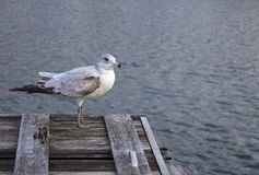 Uccello sul bacino immagine stock libera da diritti