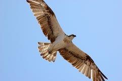 Uccello sul cielo Fotografie Stock