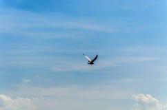 Uccello sul cielo immagine stock