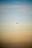 Uccello sul cielo immagini stock