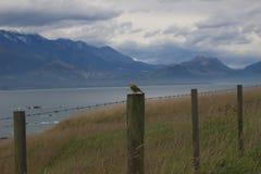 Uccello sul collegare Fotografia Stock Libera da Diritti