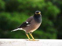 Uccello sul davanzale immagine stock