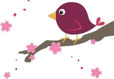 Uccello sul fiore di ciliegia Immagini Stock