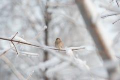 Uccello sul ¿ ghiacciato del branchÐ dell'albero Fotografia Stock