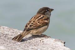 Uccello sul lago Immagini Stock