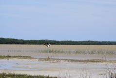 Uccello sul lago in Africa fotografia stock