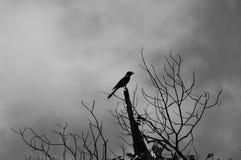 Uccello sul ramo immagini stock