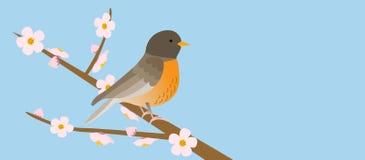 Uccello sul ramo, molla illustrazione vettoriale