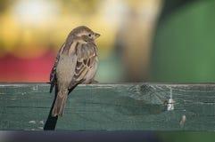 Uccello sul recinto Fotografia Stock Libera da Diritti