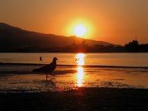 Uccello sull'alba di tramonto della spiaggia Fotografie Stock Libere da Diritti