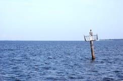 Uccello sull'alberino dell'indicatore della barca. fotografia stock libera da diritti