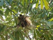 Uccello sull'albero immagini stock libere da diritti