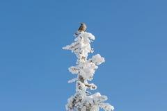 Uccello sull'albero Fotografie Stock