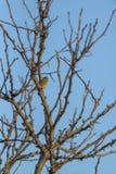 Uccello sull'albero 3 immagini stock