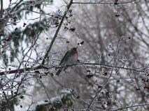 Uccello sull'albero del ghiaccio Fotografie Stock