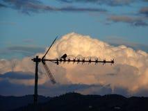 Uccello sull'antenna Fotografie Stock Libere da Diritti