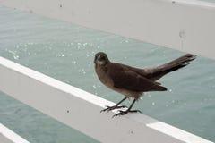 Uccello sulla ferrovia dal mare Fotografia Stock Libera da Diritti