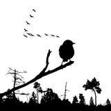 Uccello sulla filiale Fotografia Stock