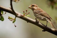 Uccello sulla filiale immagine stock