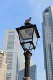 Uccello sulla lampada di via nel fondo del grattacielo Fotografia Stock