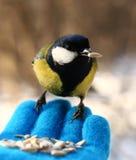Uccello sulla mia mano Fotografie Stock