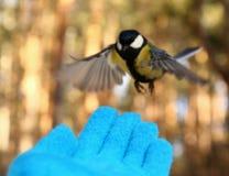 Uccello sulla mia mano Immagine Stock