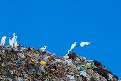 Uccello sulla montagna di immondizia Fotografia Stock