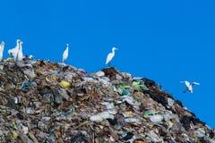 Uccello sulla montagna di immondizia Fotografie Stock