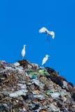 Uccello sulla montagna di immondizia Immagine Stock