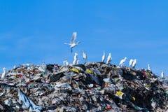 Uccello sulla montagna di immondizia Fotografie Stock Libere da Diritti