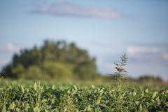 Uccello sulla pianta dell'ambrosia Fotografia Stock Libera da Diritti