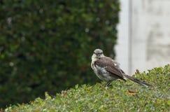 Uccello sulle barriere Fotografia Stock