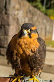 Uccello sveglio Fotografia Stock Libera da Diritti