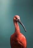Uccello tropicale fotografie stock