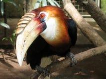 Uccello tropicale Immagini Stock
