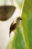 Uccello tropicale Fotografia Stock Libera da Diritti