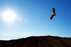 Uccello tropicale sopra il fondo del cielo blu Fotografie Stock Libere da Diritti