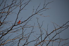 Uccello in un albero Fotografia Stock Libera da Diritti