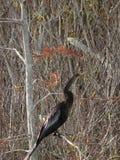 Uccello in un albero nella palude Immagine Stock