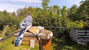 Uccello in un alimentatore stock footage