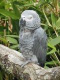 Uccello in una filiale Immagine Stock Libera da Diritti