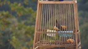 Uccello in una gabbia archivi video