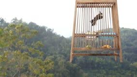 Uccello in una gabbia video d archivio