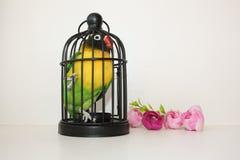 Uccello in una gabbia Alloggio di piccole dimensioni Fotografia Stock Libera da Diritti
