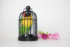 Uccello in una gabbia Alloggio di piccole dimensioni Fotografie Stock Libere da Diritti