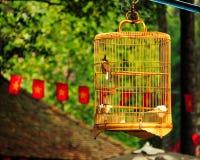 Uccello in una gabbia che appende fuori in natura fotografia stock