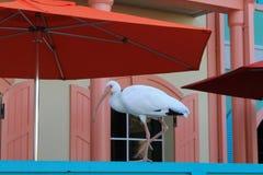 Uccello urbano bianco Immagini Stock