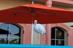 Uccello urbano bianco Immagini Stock Libere da Diritti