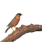 Uccello variopinto immagine stock