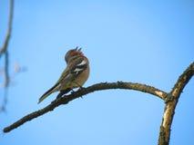 Uccello variopinto Fotografie Stock Libere da Diritti